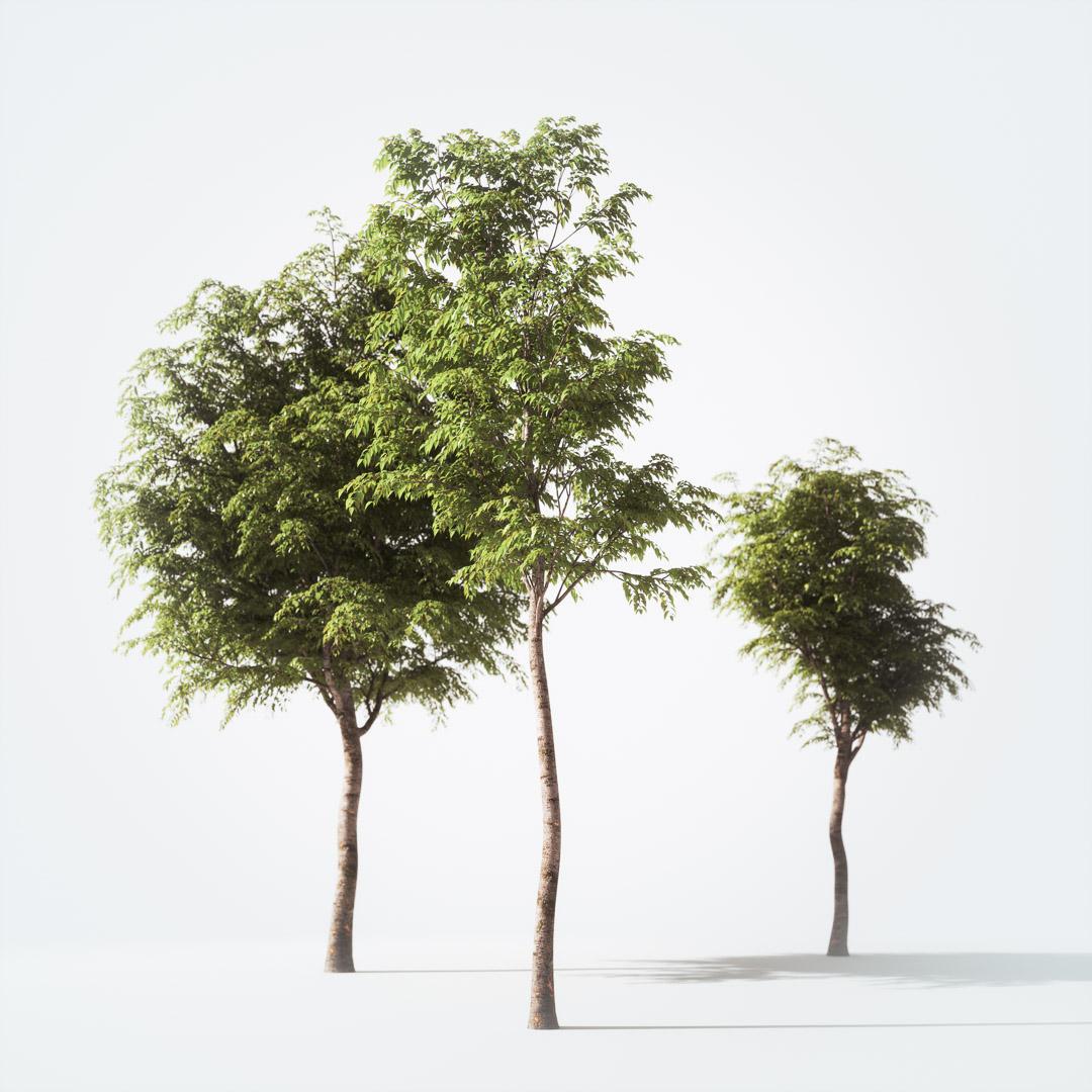 Trees free 3d models