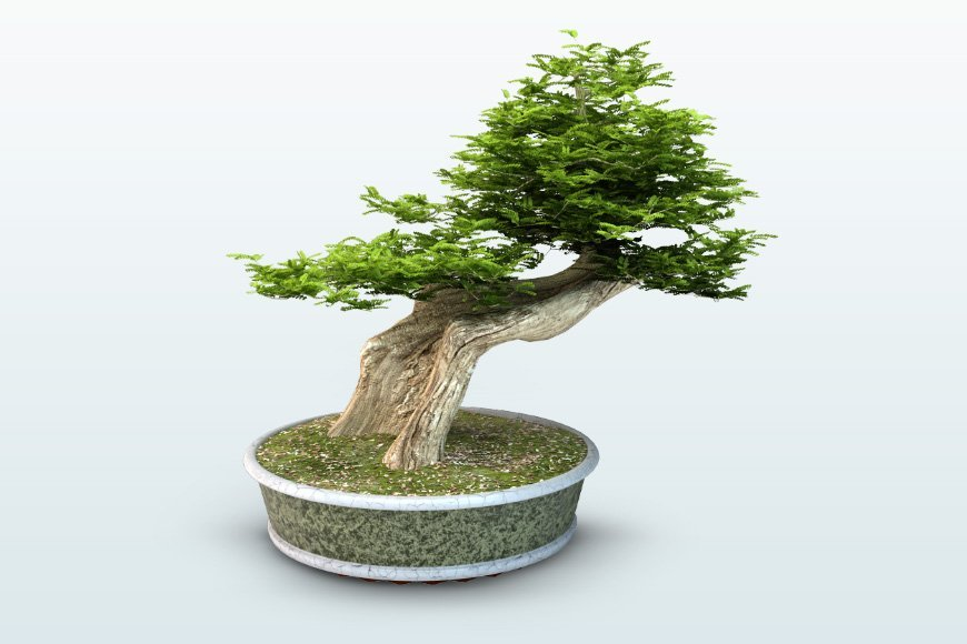 Free 3d models - Bonsai Trees - Viz-People