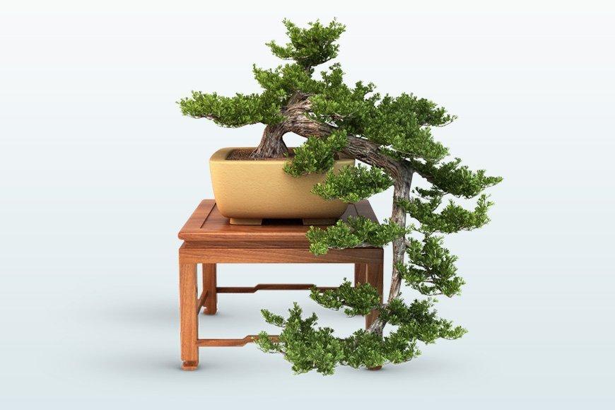 Free 3d Models Bonsai Trees Viz People