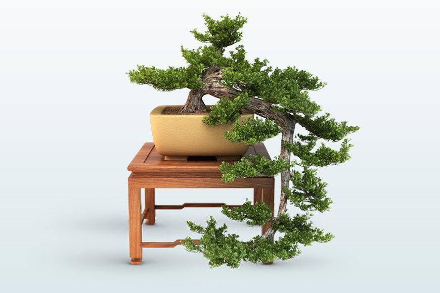 3dSkyHost: Free 3d models  Bonsai Trees