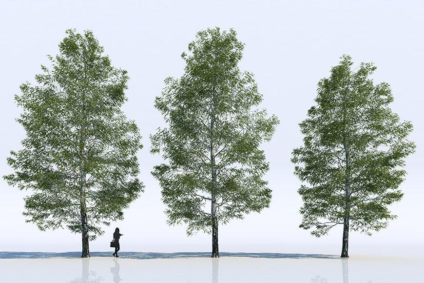 Free 3d models - Trees - Viz-People